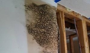 A Mold Infestation Found In The Drywall After A Flooding Incident