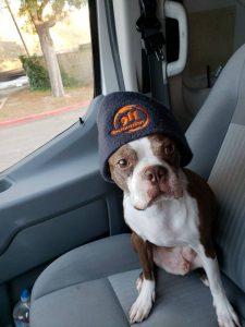 911-restoration-dog-hat